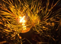 From Reflections: A Miniature Star of Bethlehem